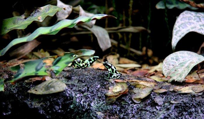 Petites grenouilles sympathiques